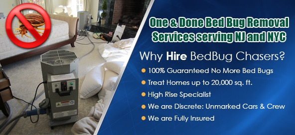Bed Bug pictures NYC, Bed Bug treatment NYC, Bed Bug heat NYC
