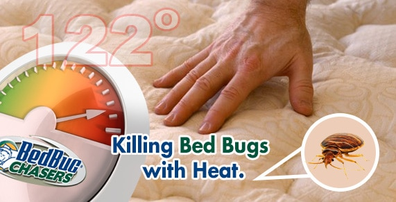 Bed Bug Dog Manhattan, How to get Rid of Bed Bugs Manhattan, Bed Bug Heat Treatment Manhattan, Bed Bug Eggs Manhattan, Bed Bug Exterminator Manhattan, Bed Bug Images Manhattan, Bed Bug Inspection Manhattan, Bed Bug Bites NYC, Bed Bug Pictures NYC, Chemical Free Bed Bug Treatment NYC, Get Rid of Bed Bugs NYC, Bed Bug Spray NYC, What to do Bed Bugs look like NYC, Kill Bed Bugs NYC, Bed Bug Treatment NYC, Bed Bug Dog NYC, How to get Rid of Bed Bugs NYC, Bed Bug Heat Treatment NYC, Bed Bug Eggs NYC, Bed Bug Exterminator NYC, Bed Bug Images NYC, Bed Bug Inspection NYC