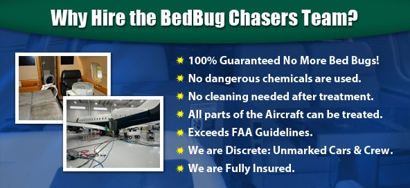 Bed Bug Bites NYC, Bed Bug Pictures NYC, Chemical Free Bed Bug Treatment NYC, Get Rid of Bed Bugs NYC, Bed Bug Spray NYC, What to do Bed Bugs look like NYC, Kill Bed Bugs NYC, Bed Bug Treatment NYC, Bed Bug Dog NYC, How to get Rid of Bed Bugs NYC, Bed Bug Heat Treatment NYC