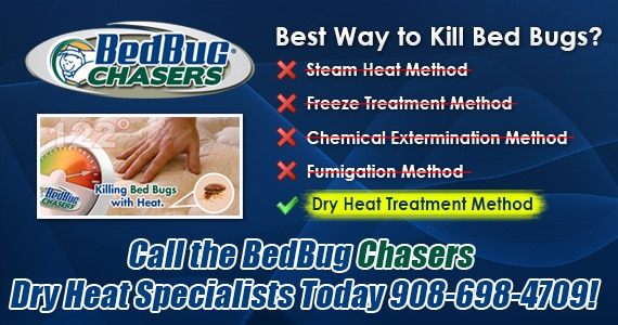 Non-toxic Bed Bug treatment NYC, bugs in bed NYC, kill Bed Bugs NYC