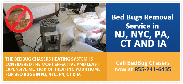 Get Rid of Bed Bugs Manhattan, Bed Bug Spray Manhattan, What to do Bed Bugs look like Manhattan, Kill Bed Bugs Manhattan, Bed Bug Treatment Manhattan, Bed Bug Dog Manhattan, How to get Rid of Bed Bugs Manhattan, Bed Bug Heat Treatment Manhattan, Bed Bug Eggs Manhattan, Bed Bug Exterminator Manhattan