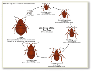 Bed Bug Bites NYC, Bed Bug Pictures NYC, Chemical Free Bed Bug Treatment NYC, Get Rid of Bed Bugs NYC, Bed Bug Spray NYC, What to do Bed Bugs look like NYC, Kill Bed Bugs NYC, Bed Bug Treatment NYC, Bed Bug Dog NYC, How to get Rid of Bed Bugs NYC, Bed Bug Heat Treatment NYC, Bed Bug Eggs NYC, Bed Bug Exterminator NYC, Bed Bug Images NYC