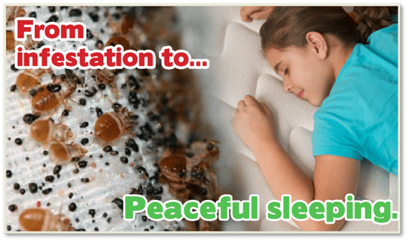 Chemical Free Bed Bug Treatment Manhattan, Get Rid of Bed Bugs Manhattan, Bed Bug Spray Manhattan, What to do Bed Bugs look like Manhattan, Kill Bed Bugs Manhattan, Bed Bug Treatment Manhattan, Bed Bug Dog Manhattan, How to get Rid of Bed Bugs Manhattan, Bed Bug Heat Treatment Manhattan, Bed Bug Eggs Manhattan, Bed Bug Exterminator Manhattan, Bed Bug Images Manhattan, Bed Bug Inspection Manhattan, Bed Bug Bites NYC, Bed Bug Pictures NYC, Chemical Free Bed Bug Treatment NYC, Get Rid of Bed Bugs NYC, Bed Bug Spray NYC, What to do Bed Bugs look like NYC, Kill Bed Bugs NYC, Bed Bug Treatment NYC, Bed Bug Dog NYC, How to get Rid of Bed Bugs NYC, Bed Bug Heat Treatment NYC, Bed Bug Eggs NYC, Bed Bug Exterminator NYC, Bed Bug Images NYC, Bed Bug Inspection NYC