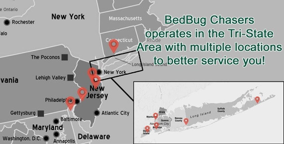 Bed Bug heat treatment, Bed Bug images, Bed Bug exterminator